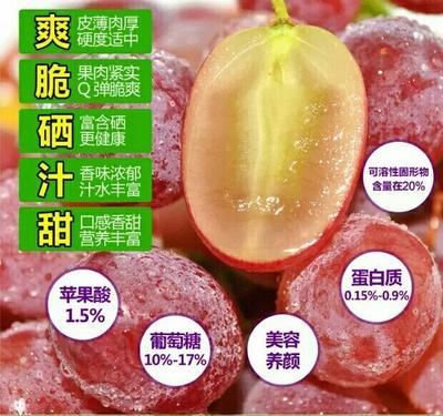 陕西渭南红提 2斤以上 5%以下 1次果
