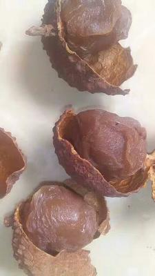 广西玉林荔枝干 12-18个月 。