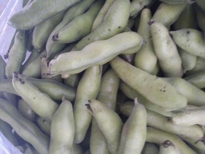 甘肃兰州新鲜蚕豆