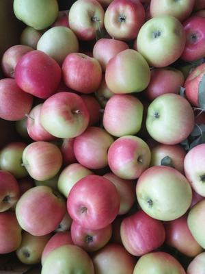这是一张关于嘎啦苹果 70mm以上 片红 光果的产品图片