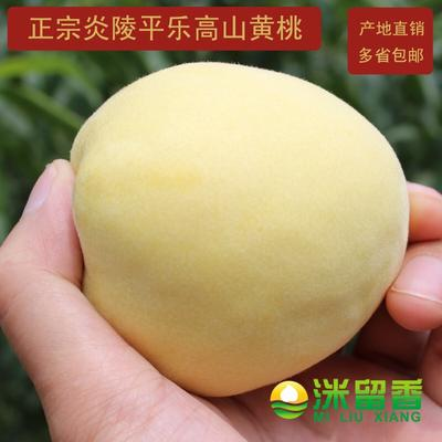 湖南株洲炎陵黄桃 70mm以上 3 - 4两