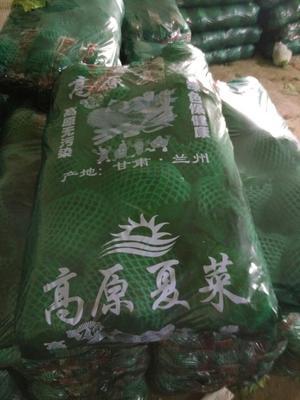 甘肃定西绿甘蓝 1.0~1.5斤