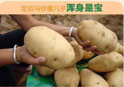 陕西榆林克新土豆 2两以上