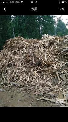 山东菏泽木材