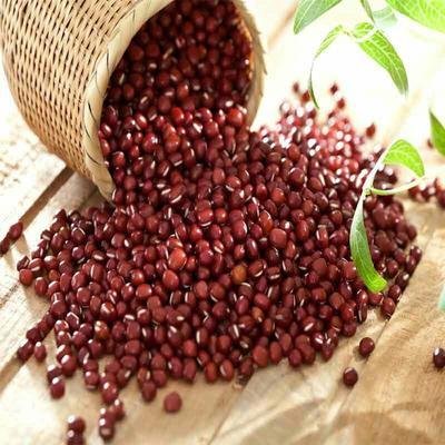 陕西榆林红小豆 散装 纯粮率≥98%