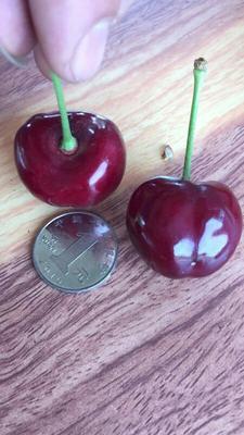 这是一张关于美早樱桃 22-24mm 18-20g的产品图片