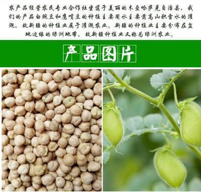 新疆维吾尔自治区昌吉回族自治州昌吉市鹰嘴豆