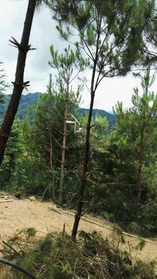陕西西安其它农机 太阳能4G无线监控