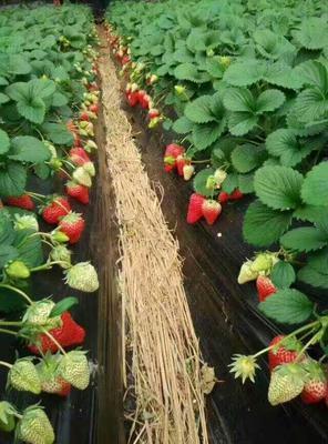 这是一张关于肥料的产品图片