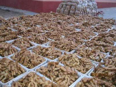 这是一张关于莒县大姜 5两以上 带土的产品图片