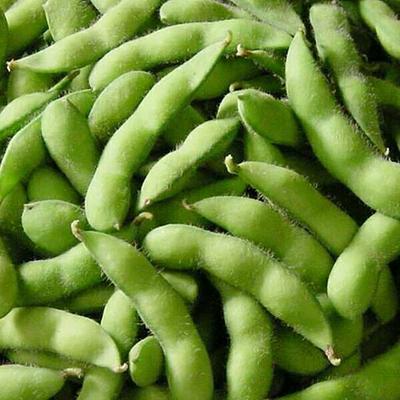 山东聊城阳谷县干毛豆粒 18~24克 干毛豆粒