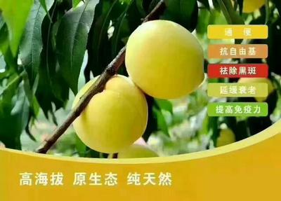 湖南郴州桂东高山黄桃 80mm以上 4两以上