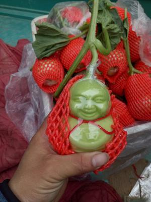 山东聊城福娃人参果 4 - 5两以上 现摘新鲜人参果,水果人生果十个装