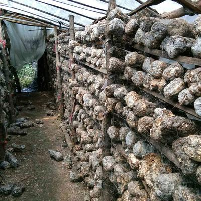 河南三门峡废食用菌棒 栽培基质