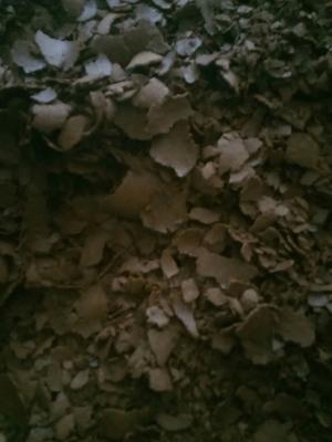 四川泸州菜籽