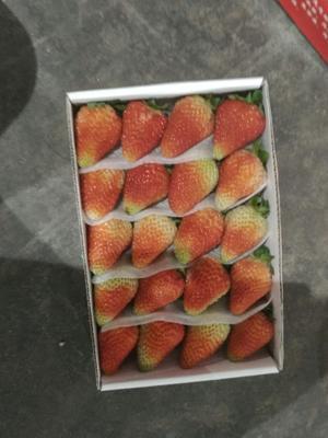 江苏南京蒙特瑞草莓 20克以上