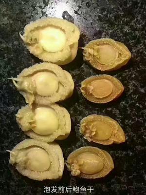 广东潮州珍珠鲍鱼 人工殖养