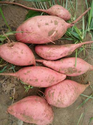 这是一张关于西瓜红 3两以上 红皮的产品图片