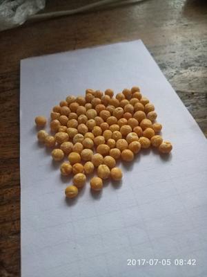 陕西西安新城区干豌豆