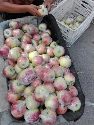 这是一张关于美八苹果 85 - 90mm 条红 膜袋的产品图片