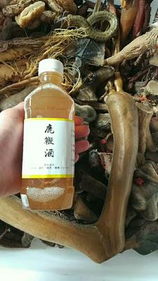 这是一张关于鹿鞭酒 24个月以上的产品图片