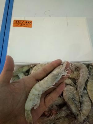 山东省潍坊市高密市基围虾 人工殖养 4-6钱