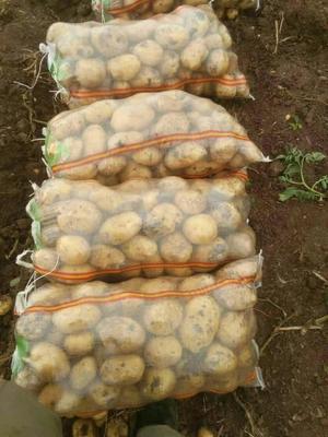 这是一张关于尤金885土豆 3两以上的产品图片