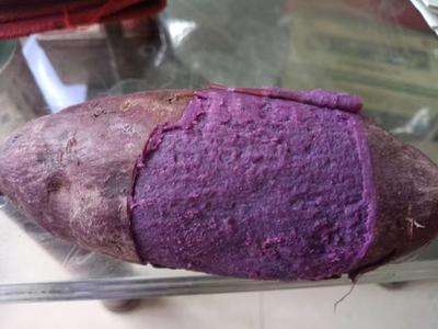 广西北海红薯 1~3两 红皮