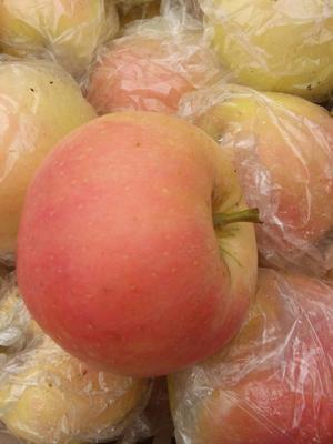 这是一张关于嘎啦苹果 膜袋 条红 75mm以上的产品图片
