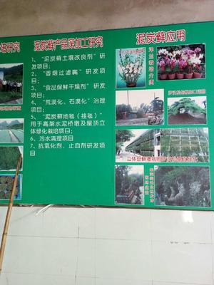 贵州省黔南布依族苗族自治州龙里县水苔 15~20cm