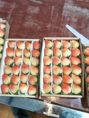 云南曲靖蒙特瑞草莓 20克以上