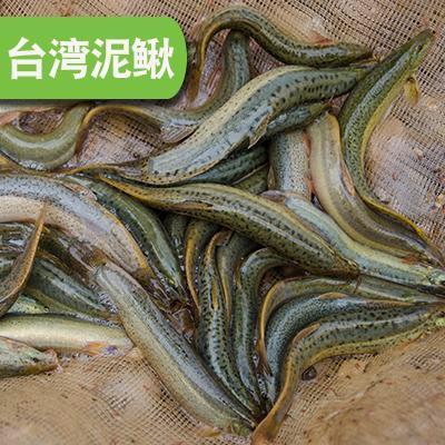 贵州遵义草鱼 人工养殖 0.05公斤 0.005克