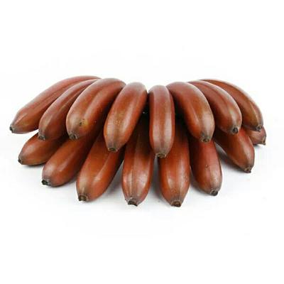 福建漳州红蕉 40斤以下 八成熟