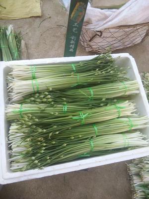 云南省大理白族自治州大理市韭菜花 头茬 30~35cm