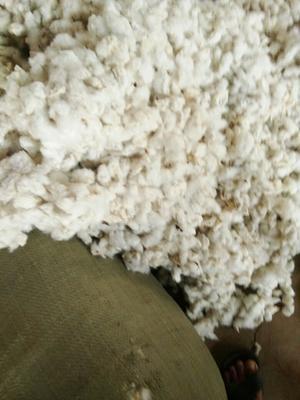 江西宜春高安市籽棉