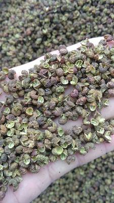 贵州黔西麻椒