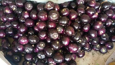山东潍坊紫光圆茄 5两以上