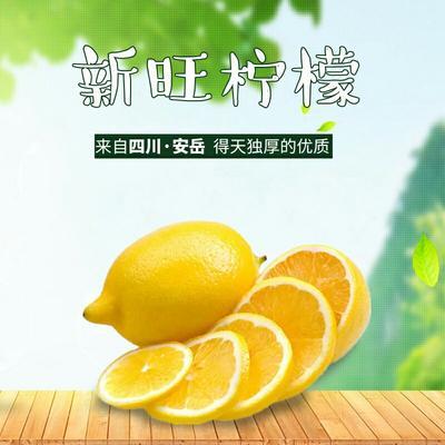 四川资阳尤力克柠檬 2.7 - 3.2两