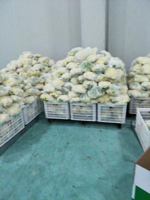 湖北天门菜椒 松散 3~4斤 乳白