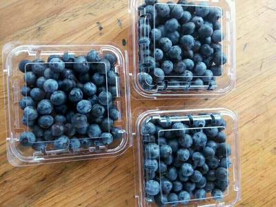 贵州黔东麻江县兔眼蓝莓 4 - 6mm以上