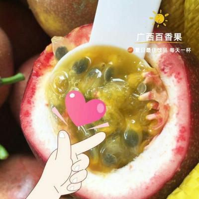 广西南宁紫色百香果 70 - 80克