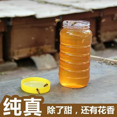 广西贵港榴莲蜜 野生蜜糖蜂糖峰蜜成熟零添加纯蜂蜜天然农家