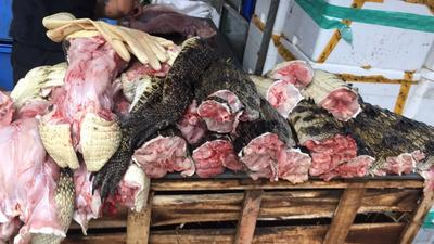 广东广州暹罗鳄 鳄鱼肉