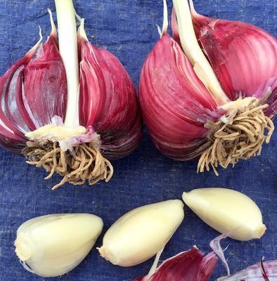 甘肃张掖民乐紫皮大蒜 5~5.5cm 多瓣蒜 5.0cm左右