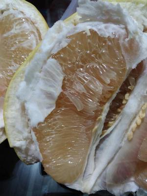 福建漳州平和蜜柚 2斤以上 平和白心柚子 官溪琯溪蜜柚