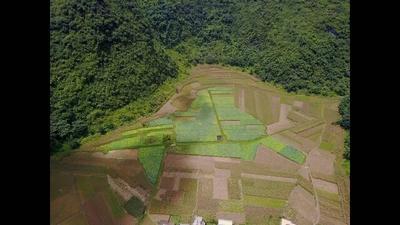 广西河池塘藕 10~15cm 3-5cm