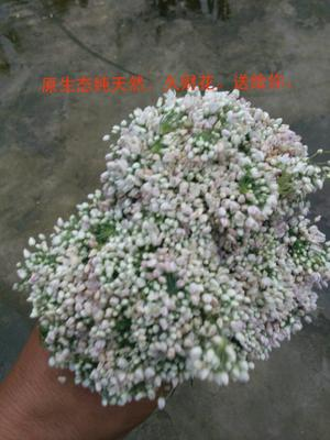 河北省邢台市临城县韭菜花 头茬 20cm以下