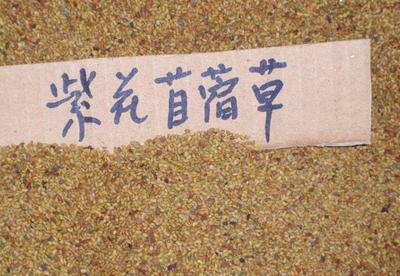 这是一张关于紫花苜蓿的产品图片