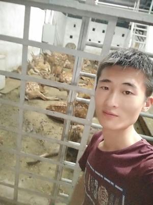 湖南永州梅花鹿