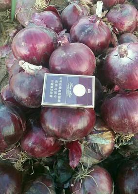这是一张关于紫皮洋葱 8cm以上 3.5~4两 紫皮的产品图片